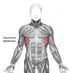 Serratus Anterior Workout