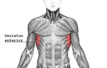 Exercises for Serratus Anterior