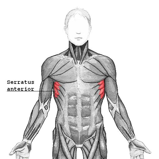 Serratus Anterior Workout - What You Need To Know