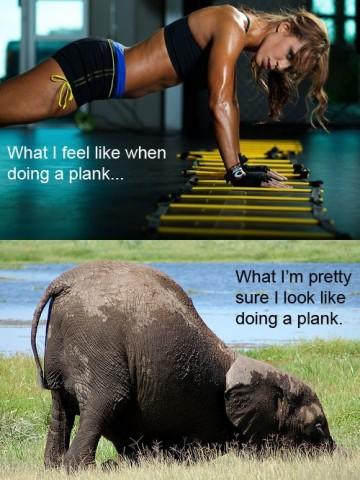 Proper Form For Ab Planks