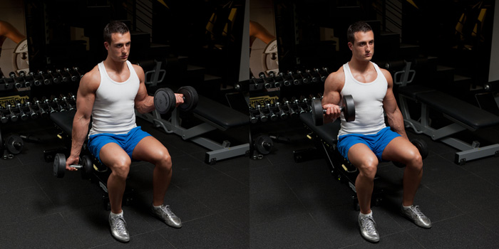 Seated Dumbbell Biceps Curls - GymPaws®