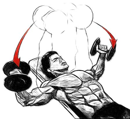 Incline Bench Press Angle Incline Your Bench at an Angle
