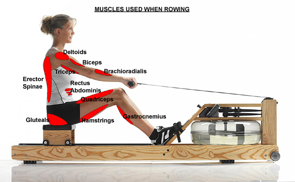 Rowing Workouts to Burn Fat