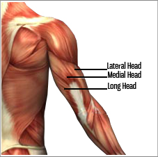 Train The Inner Triceps