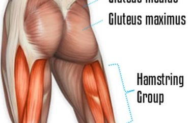 Show Your Gluteus Maximus